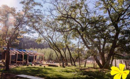 Lesní školka Petrklíč